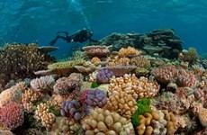 El Nino causes coral bleaching in Con Dao islands