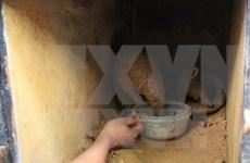Twenty-two Sunda pangolins rescued in Ninh Binh