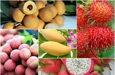 Fruit, vegetable export value up in H1