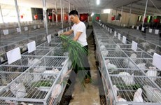 New-style cooperatives piloted in Mekong Delta
