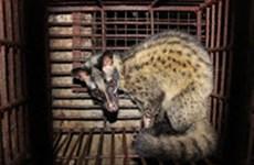 Commercial breeding of endangered wildlife forbidden