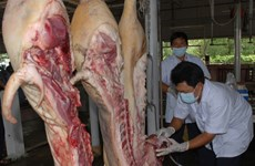 HCM City to use high-tech method to trace pork origins