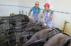 Tuna export revenue predicted to remain unchanged in 2016