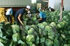 Ambassador: New Zealand can help Mekong Delta with hi-tech farming