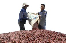 Coffee exports to hit 1.5 mln tones this year