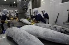 Japanese aquaculture firms eye Vietnamese market