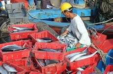 Seafood catches reach 2 million tonnes in eight months