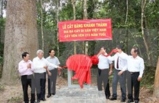 Heritage title given to centuries-old trees in Tay Ninh