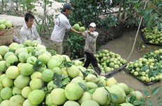 Mekong Delta farming cooperatives link up