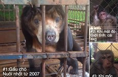 Wild sun bear, monkeys saved in Dak Lak