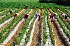 Tay Ninh aims to be agri-tech hub