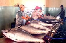 Vietnam's tuna exports up slightly