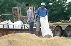 Thailand suspends rice auctions