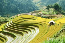 Mu Cang Chai boasts picturesque terraced rice fields