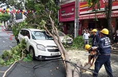 HCM City urged to inspect thousands of trees