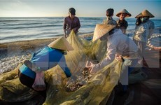 Deputy PM urges fast delivery of compensation for marine pollution vic