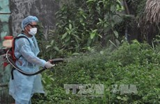 HCM City records increasing dengue cases