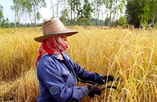 Thailand's agricultural development efforts highlighted