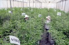 Vietnam calls for Japan's investment in agriculture