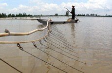 Fishermen switch jobs as Mekong Delta dries up