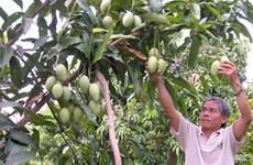 Mekong Delta urged to use advanced farming techniques