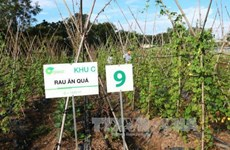 Tay Ninh eyes hi-tech agriculture cooperation with Japan