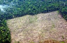 World Bank, Denmark support Indonesia's forest management