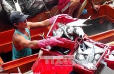 Fishermen earn good tuna profits
