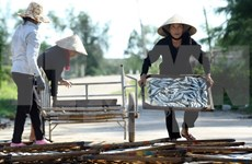 Central localities work on Formosa's fish death compensation