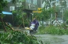 Storm Sarika weakens into tropical pressure