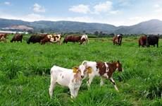 Vietnam, Netherlands partner to improve farm produce's value