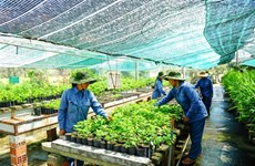 Vietnam needs safe herbal products