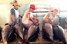 Tuna export shows sign of recovery