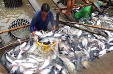 Dong Thap leads Mekong Delta in tra fish output