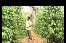 EU – promising market for Vietnamese farm produce