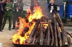 Vietnam destroys trafficked elephant tusks, rhino horns