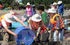 Nghe An protects marine resources