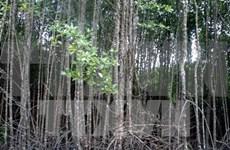 Ca Mau preserves coastal protective forests