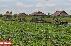Go Thap lotus field well-known in Dong Thap