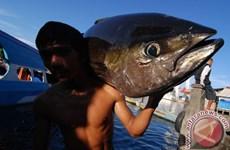 Indonesia to increase fish consumption