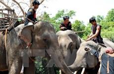Elephant conservation comes into spotlight