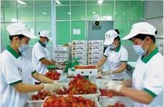 Vietnamese fruits gradually conquer foreign markets
