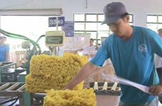 Vietnam earns 392 mln USD from rubber export in two months
