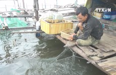 Thua Thien-Hue recovers fishery activities after Formosa incident