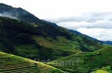 Rice terraces stun visitors to northern mountainous region