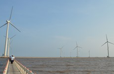 Wind farm – emerging tourist attraction in Bac Lieu