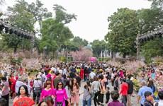 Japanese cherry blossom festival fascinates Hanoi locals