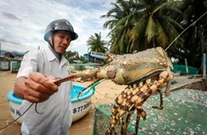 Fishing village builds fortune from lobsters