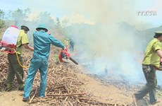 Da Nang forest fire service on high alert due to heat wave
