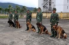 Police dogs in Da Nang city